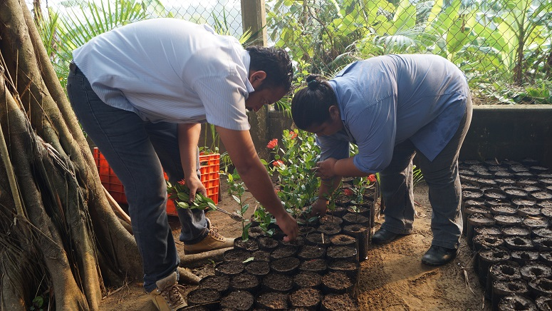 Inicia vivero municipal de tuxtepec reproducci n de isoras for Viveros en oaxaca